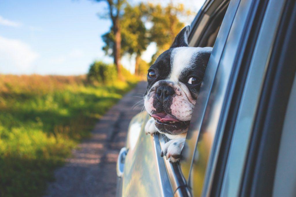 Dog in Car Holistic List