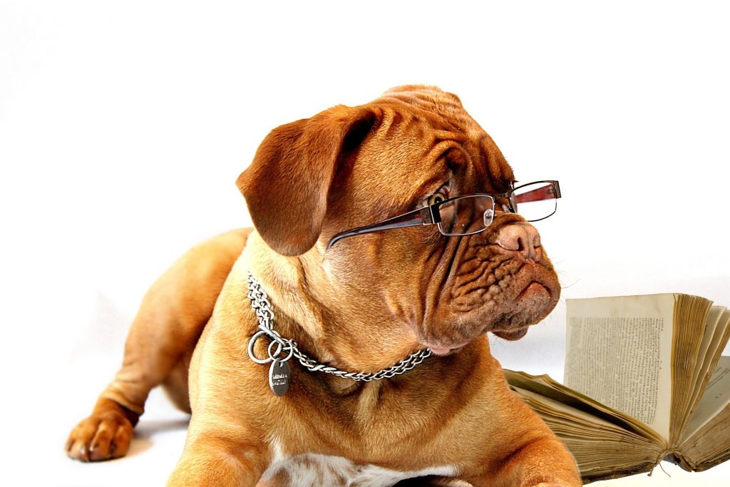 Dog Glasses Holistic List