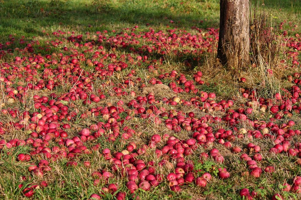 Apple Picking - Holistic List