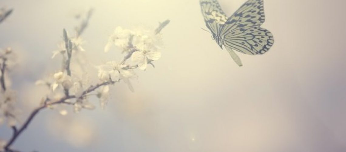 butterfly_1mb