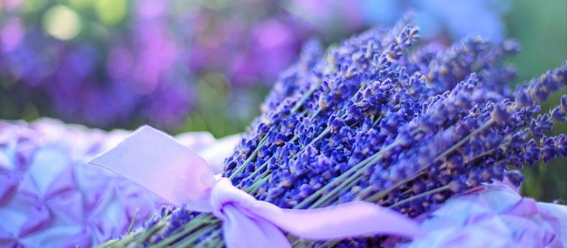 lavender-2482374_1920
