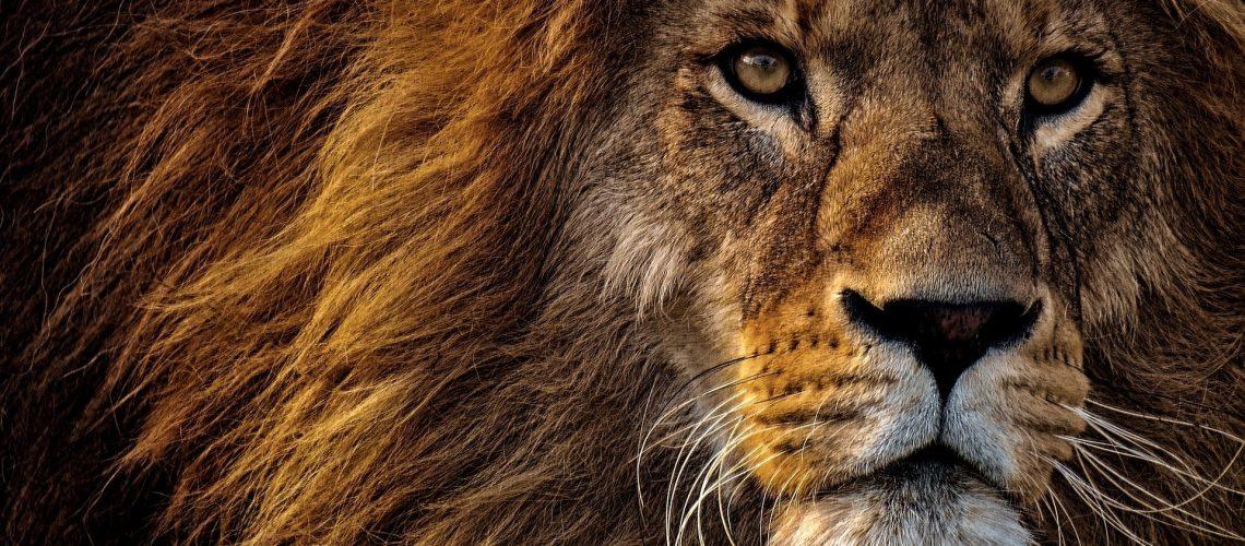 Lion August Holistic List