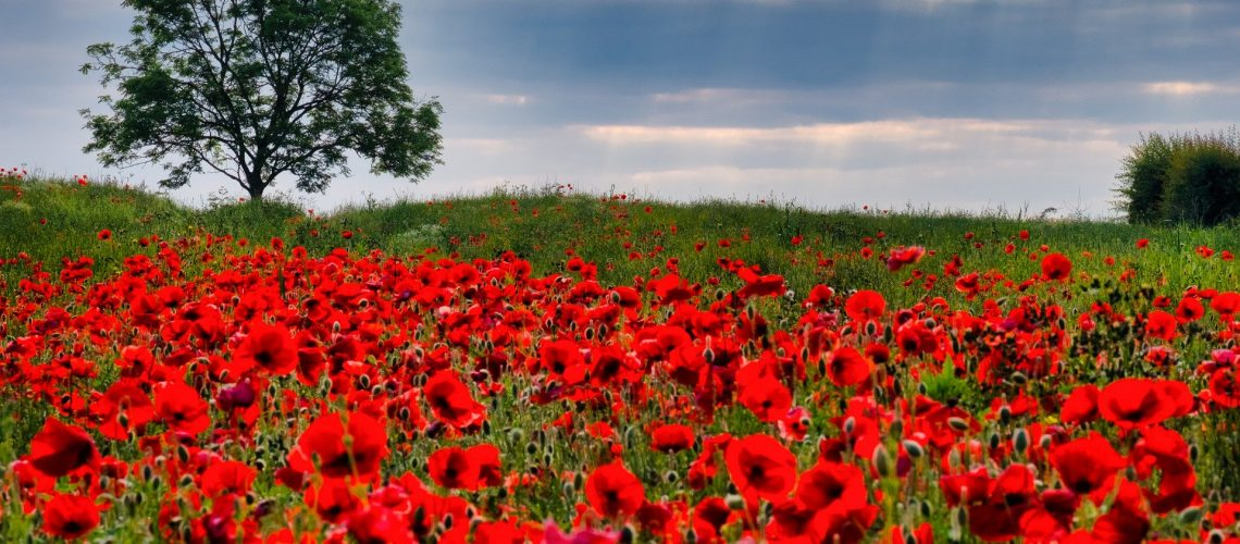 Poppies VE Day Holistic List